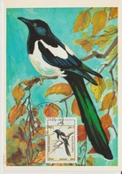 Afghanistan Carte Maximum Oiseau 1985 Pie 1284 - Afghanistan