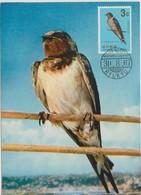 Ryu Kyu Carte Maximum Oiseau 1966 Hirondelle 143 - Timbres