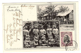 Memorias De COSTA RICA - Finea De Bananos - Raeimos De Bananos - Costa Rica