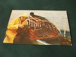 Conchiglia Shell  COQUILLES   CONCHAS  CROSTACEO ATLANTIC COST FISHERMAN PESCATORE PESCA  U.S.A. PICCOLO FORMATO - Pesca