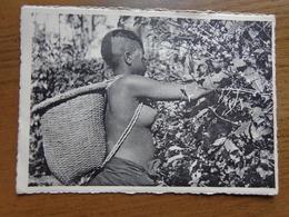 Naakt, Nude, Naked / Coeilette Du Café Arabica Par Jeune Fille Benay-Bongo --> écrit - Beauté Féminine D'autrefois (1941-1960)