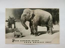 Corner Durov Circus Nanny Elephant Stroller Children 1957 - Elefanti