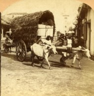 Ceylan Colombo Scene De Rue Chariot Boeufs Ancienne Photo Stereo RY Young 1900 - Stereoscopic