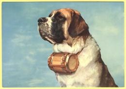 Tematica - Cani - 1970 - Esemplare Di Cane Del San Bernardo - Not Used - Cani