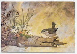 Modern Card - Wren And Vole - Artist Kenneth Lilly - Birds