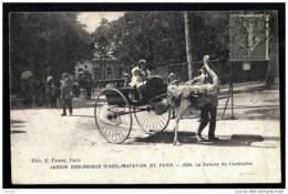 CPA ANCIENNE FRANCE- PARIS (75)- JARDIN ZOOLOGIQUE D'ACCLIMATATION- ATTELAGE- LA VOITURE DE L'AUTRUCHE EN TRES GROS PLAN - Parks, Gärten