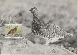 Islande Carte Maximum Oiseau 1965 Lagopède 343 - Cartoline Maximum