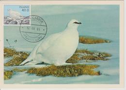 Islande Carte Maximum Oiseau 1965 Lagopède 344 - Cartoline Maximum