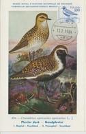 Islande Carte Maximum Oiseau 1981 Pluvier 521 - Cartoline Maximum