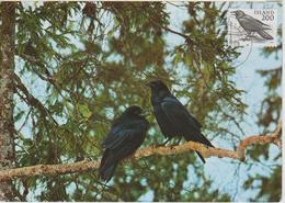 Islande Carte Maximum Oiseau 1981 Corbeau 522 - Cartoline Maximum