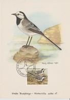 Islande Carte Maximum Oiseau 1986 Yv 597 - Cartoline Maximum