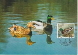 Islande Carte Maximum Oiseau 1987 Yv 624 - Cartoline Maximum