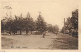 Heide - Kalmthout