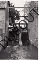 Koersel Molen/Moulin Foto E66 - Beringen