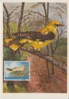 Saint Marin Carte Maximum 1960 Oiseau Loriot 479 - Lettres & Documents
