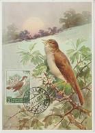 Saint Marin Carte Maximum 1960 Oiseau Rossignol 480 - Lettres & Documents