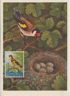Saint Marin Carte Maximum 1960 Oiseau Chardonneret 484 - Lettres & Documents
