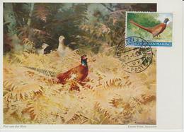 Saint Marin Carte Maximum 1960 Oiseau Faisan 486 - Lettres & Documents