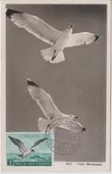 Saint Marin Carte Maximum 1959 Oiseau Mouette PA 111 - Poste Aérienne