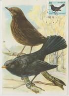Suède Carte Maximum 1970 Oiseau Merle 673 - Maximum Cards & Covers