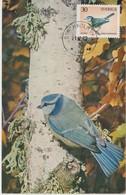 Suède Carte Maximum 1970 Oiseau Mésange 677 - Maximum Cards & Covers