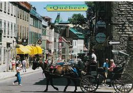QUEBEC  RUE SAINT DENIS SREET ATTELAGE ANIMATION - Québec - La Citadelle