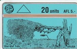 Aruba - Divi Divi Tree - 312B - Aruba