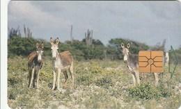 Bonaire - Donkeys - Antilles (Netherlands)