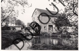 Overpelt Molen/Moulin Foto E110 - Overpelt