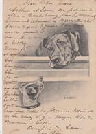 DOG / CHIEN / HUND / HOND - Chiens