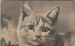 CAT/ CHAT / KAT / EYES IN GLASS / DES YEUX EN VERRE / OGEN IN GLAS  1925 - Chats