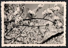 B9977 - TOP Foto - Abstrakt Abstract - Kirschblüten - Fotografie