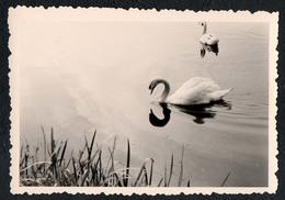B9987 - TOP Foto - Snapshot Schnappschuß - Schwan Swan - Fotografie