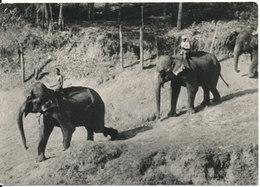 Ceylon Postcard Sent To Switzerland (Elephants) - Sri Lanka (Ceylon)