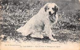 Cauterets (65) - Type Du Chien De Montagne Aux Aguets - Cauterets