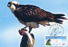 BELGIQUE BELGIUM (2011) - Carte Maximum Card ATM - Balbuzard Pêcheur - Osprey - Águila Pescadora (Pandion Haliaetus) - Tarjetas – Máxima