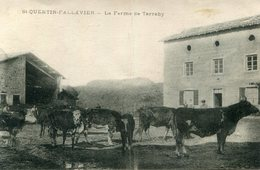SAINT QUENTIN FALLAVIER(FERME)  VACHE - Frankrijk