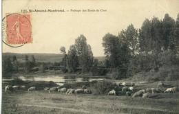 Saint-Amand-Montrond .  Paysage Des Bords Du Cher . Moutons Au Pâturage .  SUPERBE CARTE 1906 . - Saint-Amand-Montrond