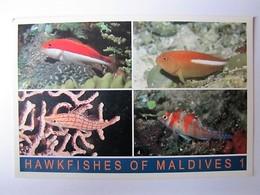 MALDIVES - Hawkfisches Of Maldives - Maldives