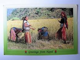 NEPAL - THORUNG PASS - Women Cutting Paddy - Nepal
