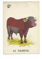 Le Taureau Chromo Image Carte à Jouer 105 X 73 Mm Bien 2 Scans - Vieux Papiers