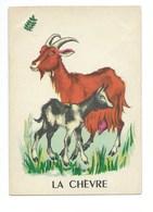 La Chèvre Chromo Image Carte à Jouer 105 X 73 Mm Bien 2 Scans - Vieux Papiers