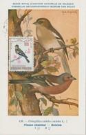 Tunisie Carte Maximum Oiseau 1965 Pinson PA 29 - Tunisia