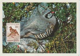 Tunisie Carte Maximum Oiseau 1965 Perdrix PA 31 - Tunisia