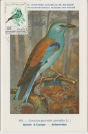 Tunisie Carte Maximum Oiseau 1965 Rollier PA 32 - Tunisia