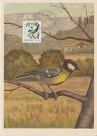 Finlande Carte Maximum Oiseau 1991 Mésange 1100 - Maximum Cards & Covers