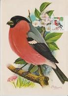 Finlande Carte Maximum Oiseau 1991 Bouvreuil 1102 - Maximum Cards & Covers
