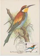 Gibraltar Carte Maximum Oiseau 1988 Merops  563 - Gibraltar
