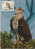 Gibraltar Carte Maximum Oiseau 1988 Pernis 565 - Gibraltar