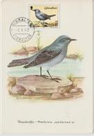 Gibraltar Carte Maximum Oiseau 1988 Monticola 566 - Gibraltar